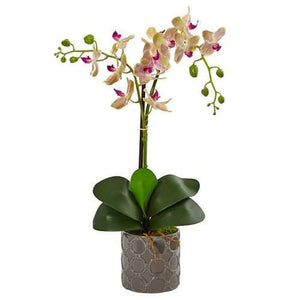 Double Phalaenopsis Orchid in Gray Ceramic Pot Silk Arrangement