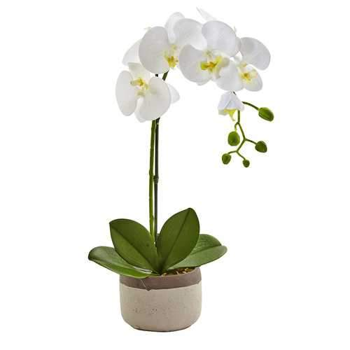 Phalaenopsis Orchid in Ceramic Pot Silk Arrangement