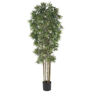6' Bamboo Japanica Silk Tree