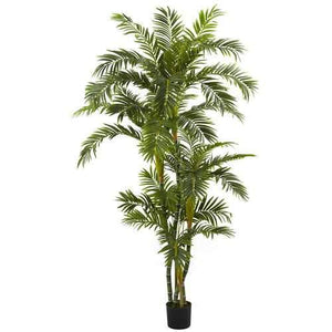 6 Curvy Parlor Palm Silk Tree
