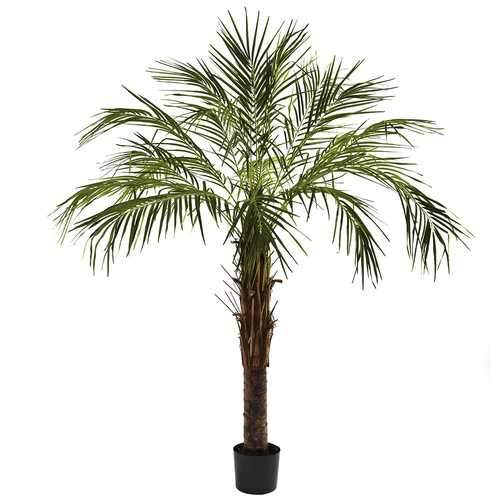 6 Robellini Palm Tree Silk