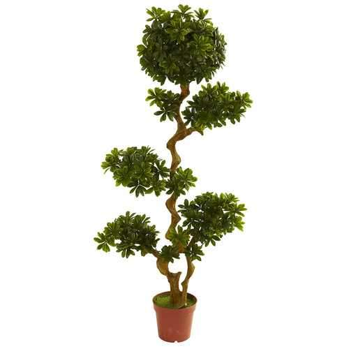 5' Pittispourm UV Resistant (Indoor/Outdoor) Silk Tree