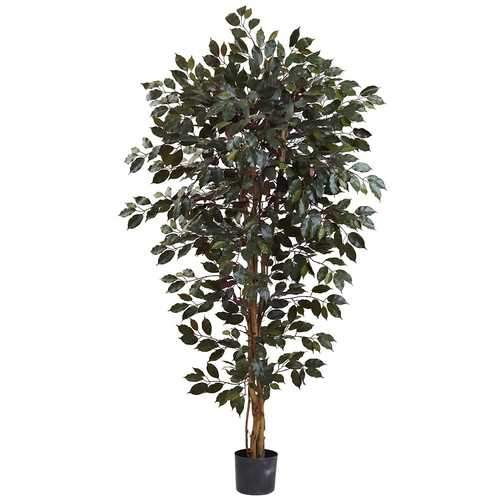 6 Capensia Ficus Tree x 3 w/1008 Lvs Silk