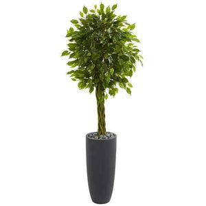 5.5 Braided Ficus Artificial Tree in Gray Cylinder Planter UV Resistant (Indoor/Outdoor) Silk Trees