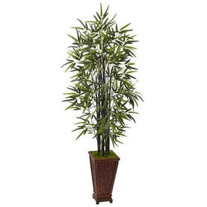 5.5 Black Bamboo Tree in Decorative Planter Silk