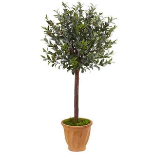 4.5 Olive Tree in Terracotta Planter Silk
