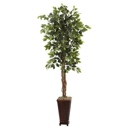 6.5 Ficus w/Decorative Planter Silk Tree