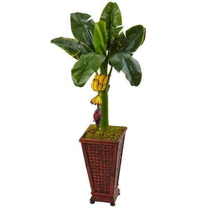3.5 Banana Tree in Wooden Planter Silk