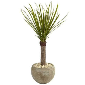3.5 Yucca Tree in Sand Colored Bowl Silk