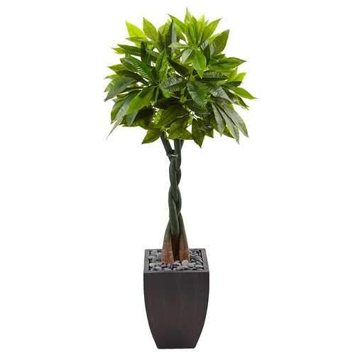 5 Money Tree in Black Square Planter Silk