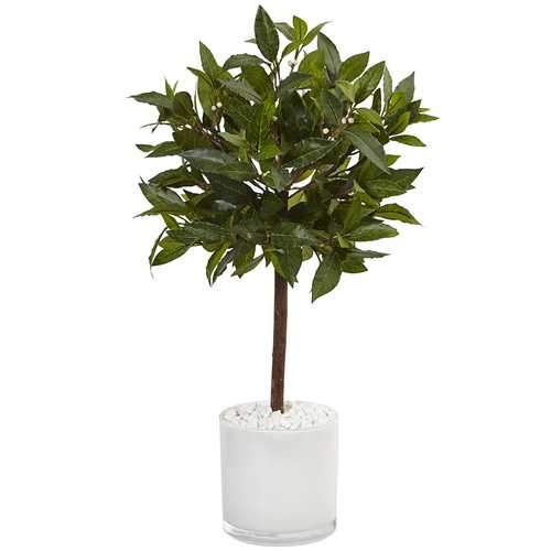 2 Sweet Bay Tree in White Glossy Cylinder Silk