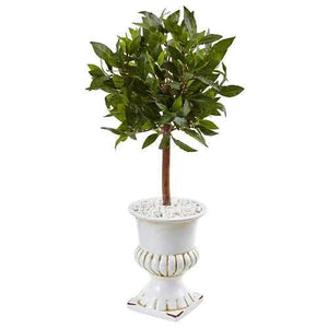 2.5 Sweet Bay Mini Topiary Tree in White Urn Silk