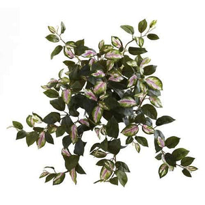 Hoya Hanging Bush (Set of 4) Silk Plant