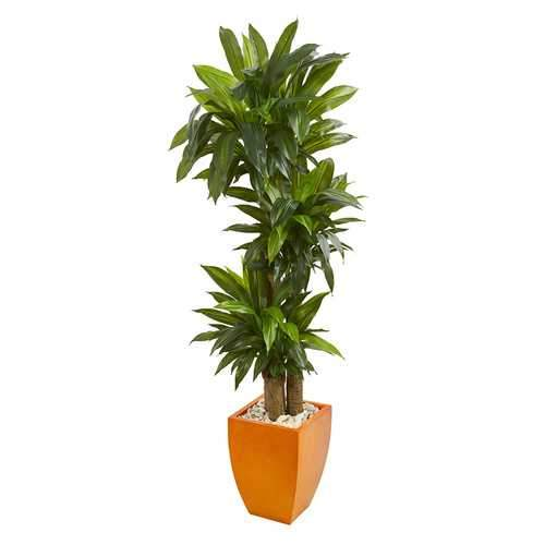 5.5 Dracaena Plant in Orange Square Planter (Real Touch) Silk Plants