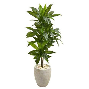 4 Dracaena Artificial Plant in Sand Colored Planter (Real Touch) Silk Plants