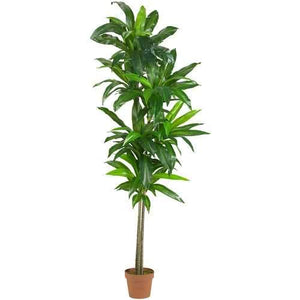 6 Dracaena Silk Plant (Real Touch)