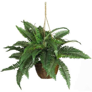 Boston Fern Silk Hanging Basket Plant