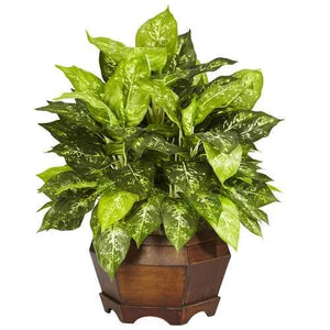 Variegated Dieffenbachia w/Large Hexagon Silk Plant