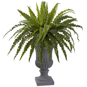 Birdsnest Fern with Urn Silk Plant