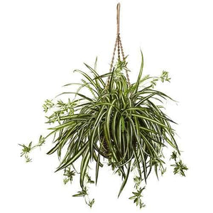 Spider Plant Hanging Basket Silk