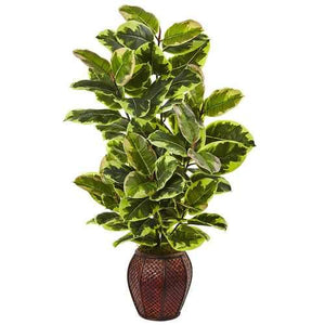 Rubber Plant with Planter Silk