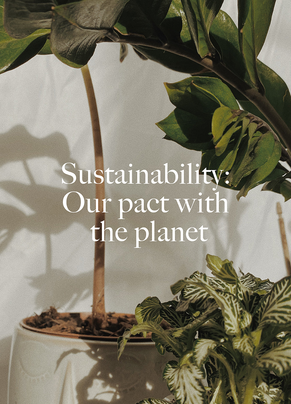 News-Sustainability: Our Pledge with the Planet - Dora Larsen | Colourful Lingerie