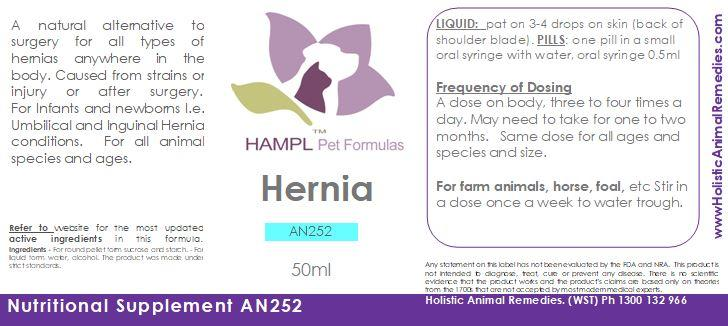 AN252 - Hernia Repair (for newborns to adult animals)