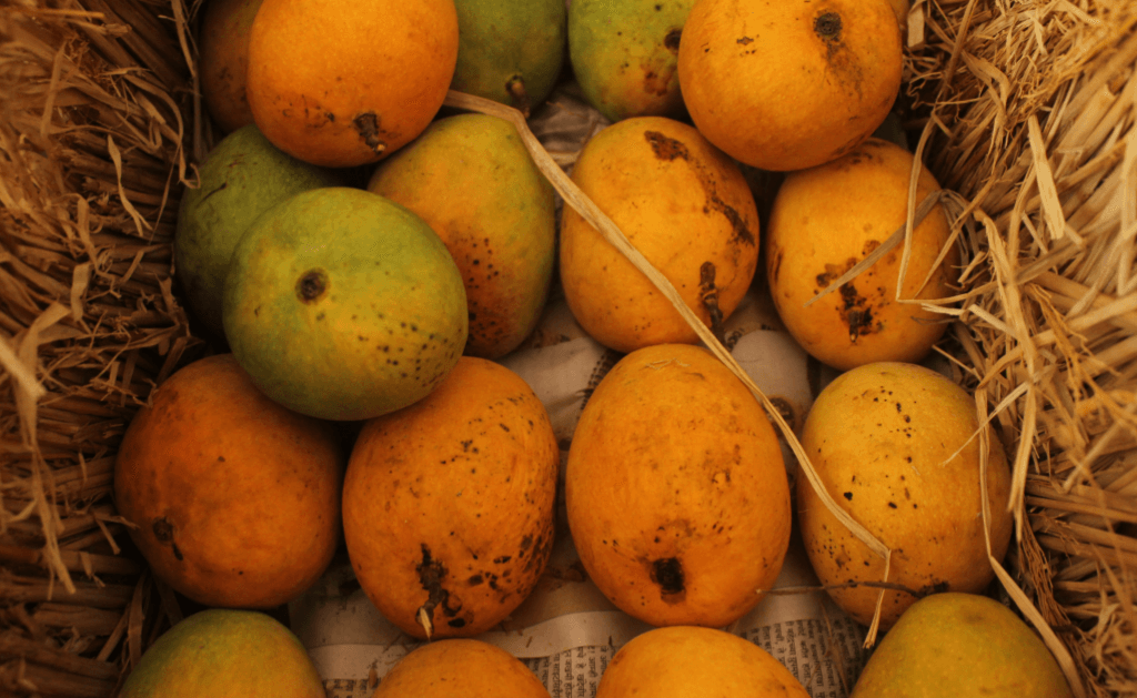 How long can you keep mango in the freezer?