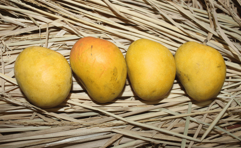 How are the mangoes processed and packed?