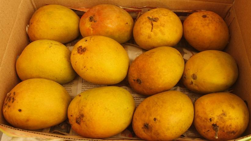 Hapus Raja King of Mangoes