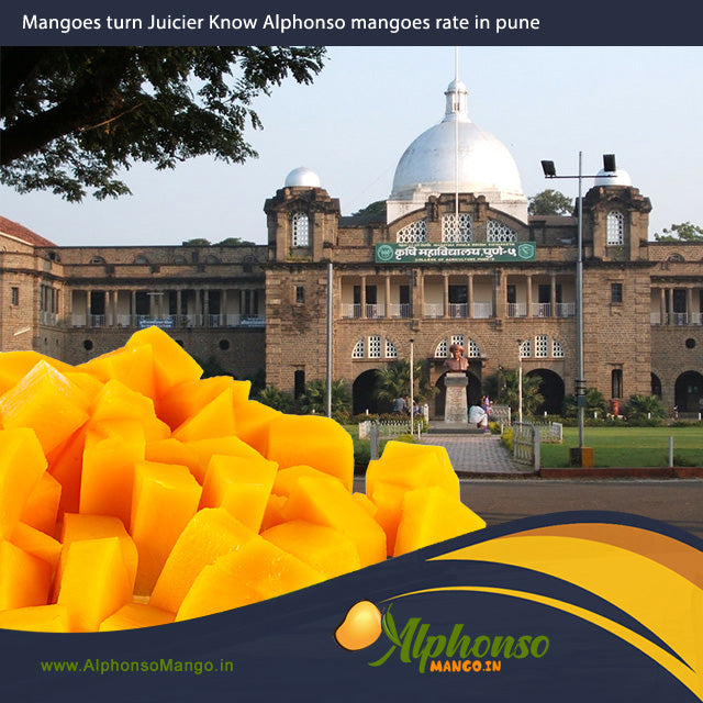 Alphonso Mango Rate in Pune, Hapus rate in pune