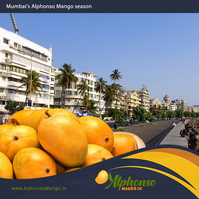 Mango Season in Mumbai