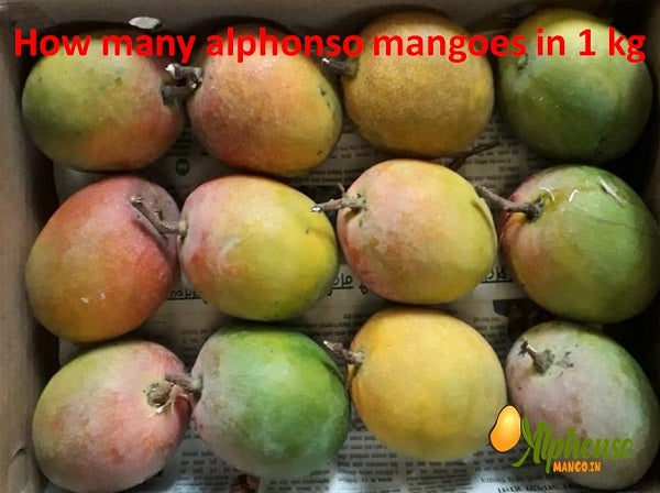 How Many Alphonso mangoes in 1 kg