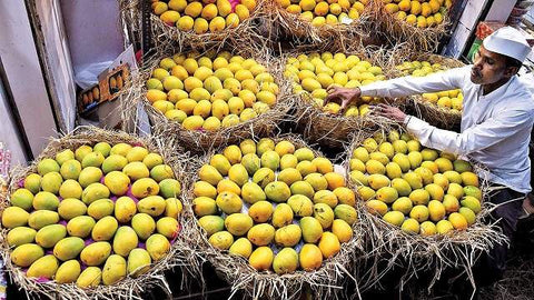Buy Alphonso Mango Wholesale in Mumbai