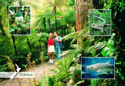 SRO234 - Rainbow Springs - Small Postcard