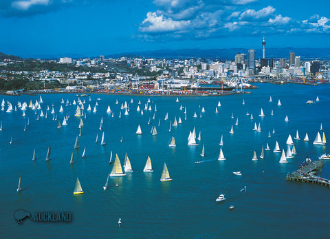 LAU005 - Auckland City & Waitemata Harbour - Large Postcard - Postcards NZ Ltd