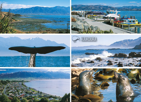 LCA048 - Kaikoura 6 View Multi - Large Postcard