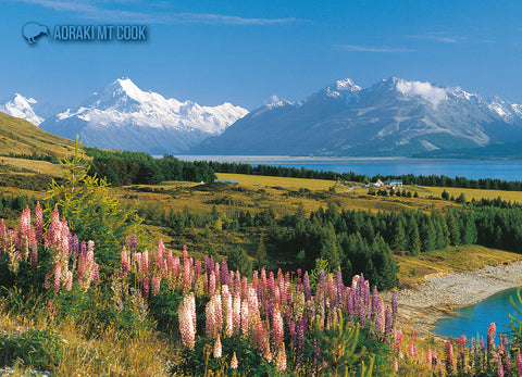 LMC097 - Mt Cook & Lupins - Large Postcard - Postcards NZ Ltd