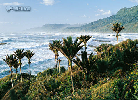 LWE182 - Nikau Palms, Westland - Large Postcard - Postcards NZ Ltd