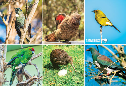 SGI529 - Native Nz Birds Multi  - Small Postcard - Postcards NZ Ltd
