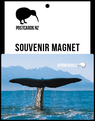 MCA138 - Sperm Whale - Magnet - Postcards NZ Ltd