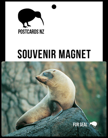 MGI095 - Fur Seal - Magnet - Postcards NZ Ltd