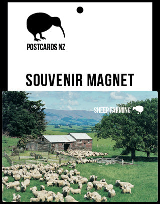 MGI097 - Sheep Scene - Magnet - Postcards NZ Ltd