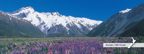 MPMC506 - Mt Sefton and Lupins - Panoramic Magnet - Postcards NZ Ltd