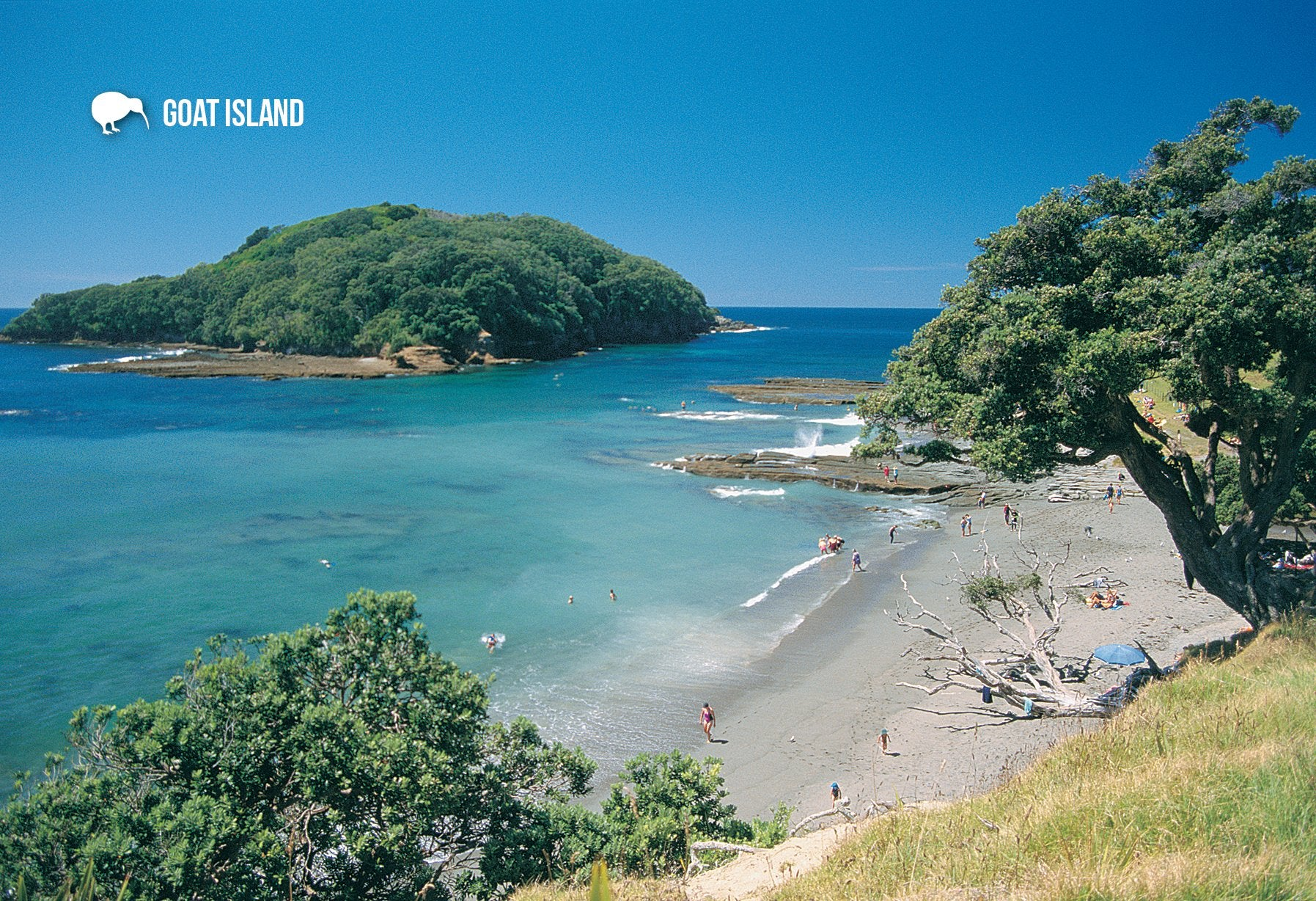 SAU115 - Goat Island - Small Postcard - Postcards NZ Ltd