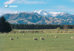 SCA290 - Sheep Grazng Mt Hutt - Small Postcard - Postcards NZ Ltd