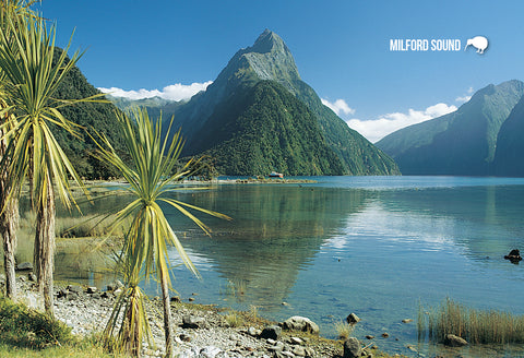 SFI65 - Eglinton Valley Fiordland - Small Postcard