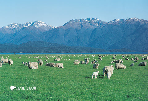 SFI669 - Sheep Lake Te Anau - Small Postcard - Postcards NZ Ltd
