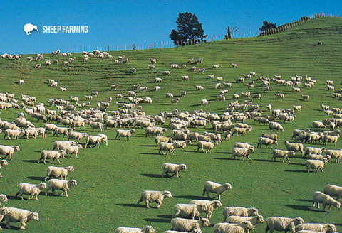 SGI483 - Sheep Farming - Small Postcard - Postcards NZ Ltd