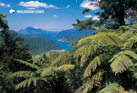 SMB651 - Tennyson Inlet, Marlborough Sounds - Small Postcar - Postcards NZ Ltd